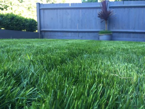 Summer lawn at its peak