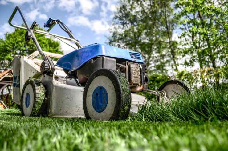 garden grass meadow green