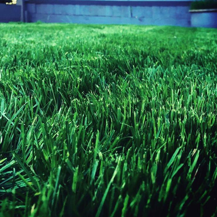 hydrated lawn