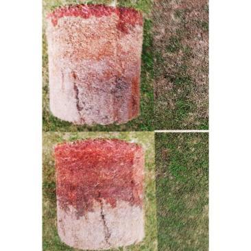 soil plugs