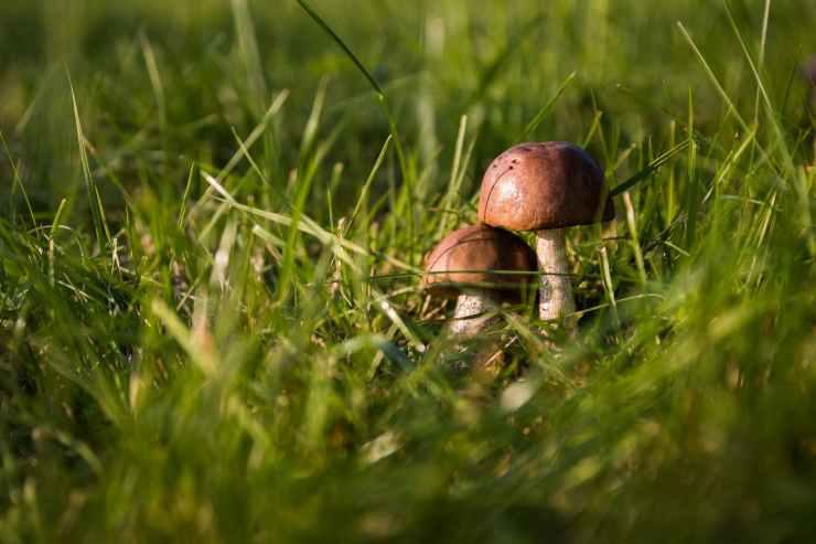 grass green mushrooms fungus